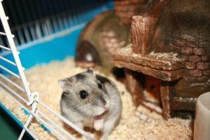 My first Hamster Mimmi by Lizzimoa