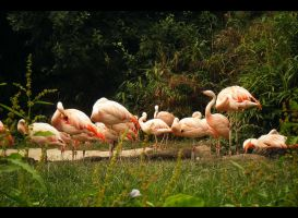 Flamingo brigade by Lucy-Redgrave