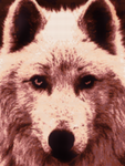 Game of Thrones Wolf Cross Stitch Pattern Preview by shingorengeki