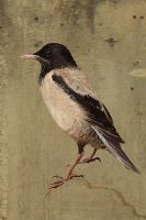 rose-colored starling by Elena-nenz