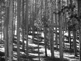 Black and white trees by Synthro