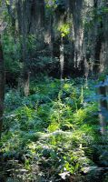 Ferns In Sunlight by like-a-seahorse