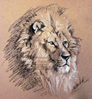 Lion by AnnaCStansfield