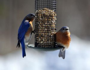 Two Blue Boids by BlueSolitaire