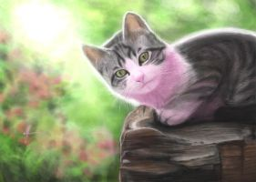 Pink cat by coixuong182