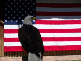The Symbol of Freedom by TimelordWitch10