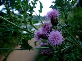 Thistle by the lake by Fogmeister