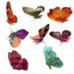 Butterfly Stock Side View 2 by Shoofly-Stock