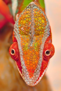 COLORFUL FACE by ELKAPL