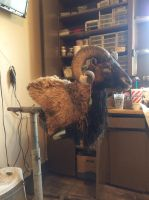 Mouflon ram 1 by WhiteCrow-Art