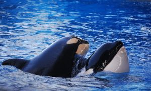 Mom? Mumma? Mommy? Mom by Tilikum
