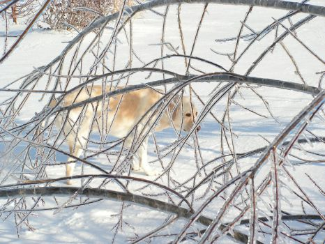 Dog in the Frozen Tundra by jimmerz28