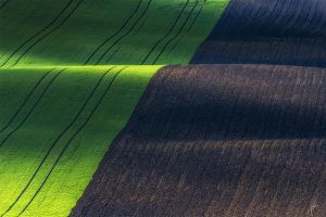-Magical fields- by Janek-Sedlar