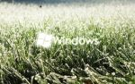 Windows on grass by CaHilART