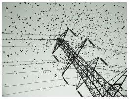 WIRE II by madmet