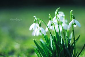 The signs of spring. by Lukreszja