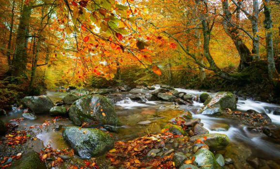 The Rusty River by borda
