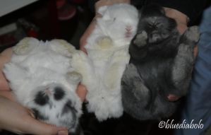 Babies from Bubi 2 weeks old by bluediabolo