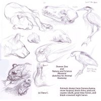 Animal Anatomy Drawings by bakubreath