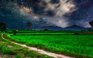 Rice field at night by kohchangphotography