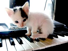 Piano Kitten v.1 by xxroxyleexx