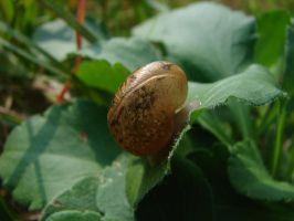 snail shell by super-chicken-stock