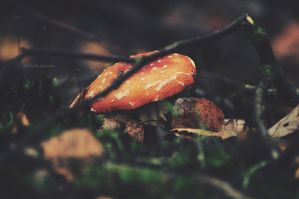 fly agaric by LindaMarieAnson