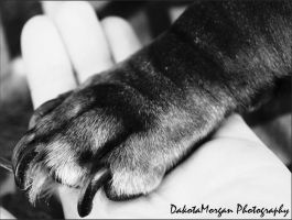 Paw by photographygirl13