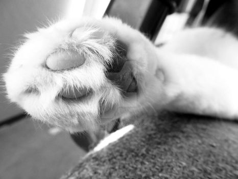Cat paw by JacobMcClure
