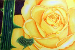 Yellow Rose by KW-Scott