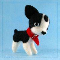Boston Terrier - front by coyohti