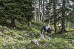 Bavarian Mountains by lokinst