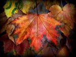 Autumn Leaves by MichiLauke