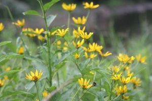 Yellow Flowers by Irie-Stock