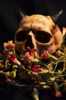Skulls and Roses by KrystalMaize