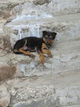 Puppy on Stairs by Ptolemeia
