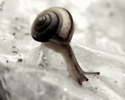 More of my snail. by RainbowCartilage
