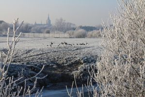 Ice landscape Diksmuide 12 by carinaD-stock