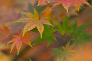 Autumn leaves 21 by TheEtherealSoul