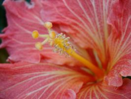 Macro Pink and Yellow by stephuhnoids