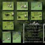 Goose family set wicasa-stock by Wicasa-stock