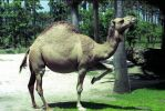 Camel Dance by OrphieG