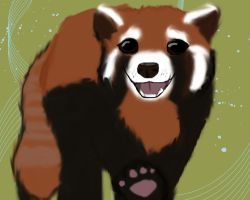Red Panda by R-dez