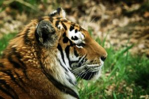 Le Tigre Profile by ph0t0k1tty