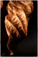 many shades of brown 2 by wildtea