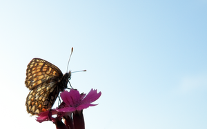 Brown Butterfly Wallpaper by Bhesi