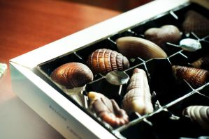 Chocolate Seashells by M-Hollaback