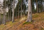 Forest Scenery by elariand