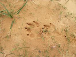sprockets paw mark in the sand by snugglebum2