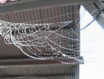 Web and Dew by Immen